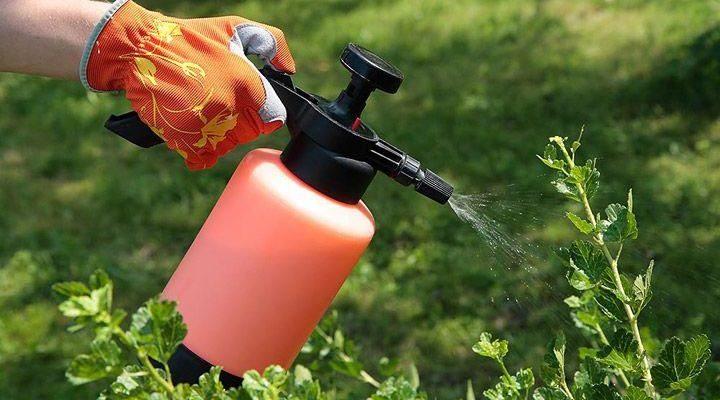 5 способов защитить свой сад от вредителей