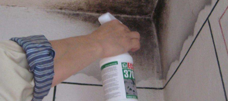 4 совета по избавлению от запаха плесени в доме
