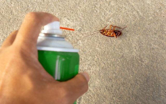 Как избавиться от тараканов без истребителя