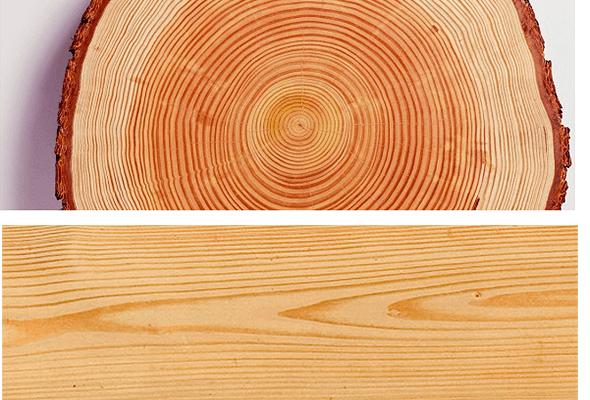 Структура состав и свойства древесины